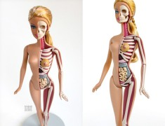 Anatomía fictícia de Barbie y Hello Kitty, ¡bonitos o horribles!