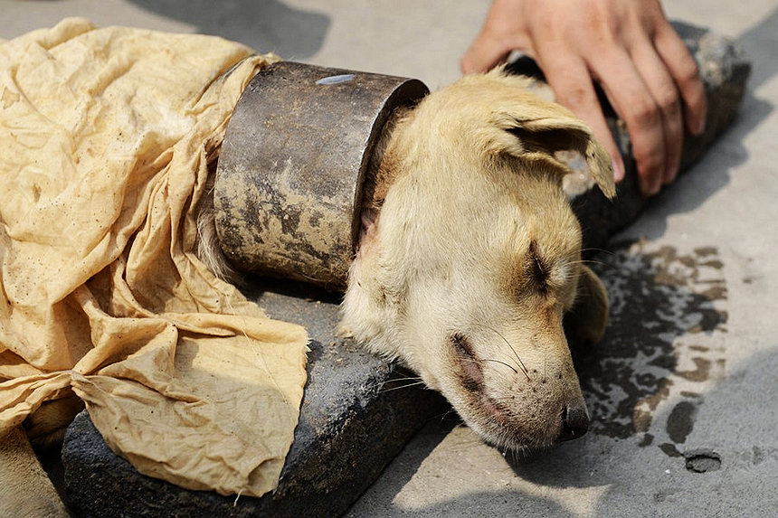 facts about the cruel abuse of animals Animal cruelty can be either deliberate abuse or simply the  those who abuse animals are also likely to harm  you could be supporting cruel and substandard.