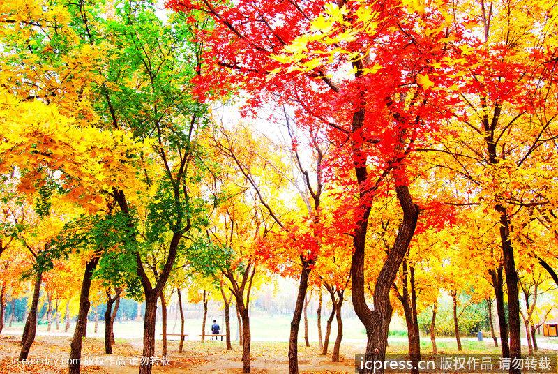 Paisajes y colores del oto o m s atractivo - Paisaje con colores calidos ...