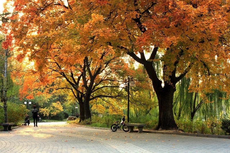 Resultado de imagem para parques de beijing