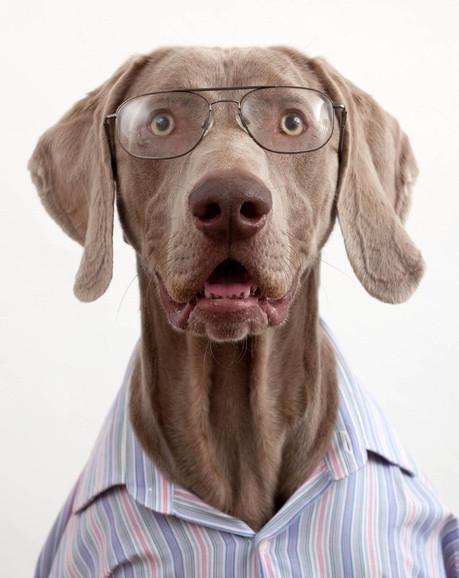 Perros gracioso posan con camisas 5