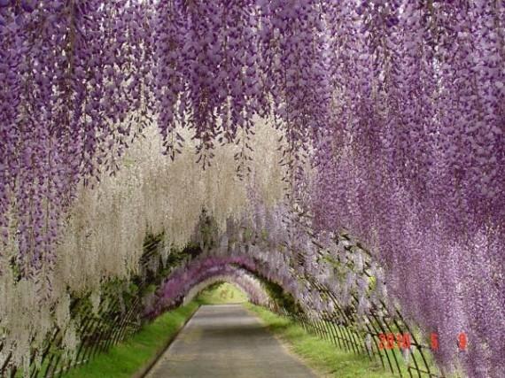 Top 10 túneles de árboles increíblemente hermosos en el mundo