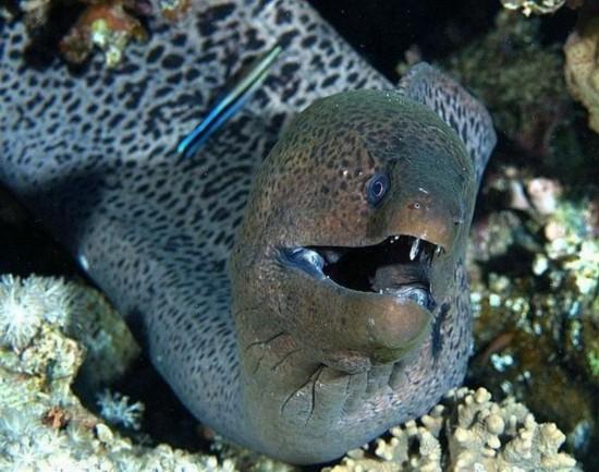 Los peces m s terribles y peligrosos del mundo spanish - Mas y mas curriculum ...