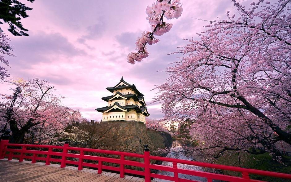 Japón se encuentra en el mejor periodo de cerezos 36