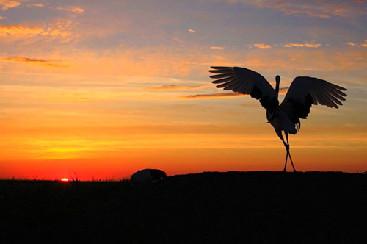 La grulla: el ave del buen augurio