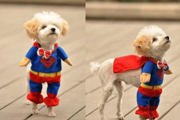 Los mejores disfraces de halloween para tu perro spanish - Disfraces del mundo ...