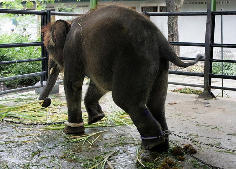 Zoologico de Surabaya, peor que el infierno de los animales