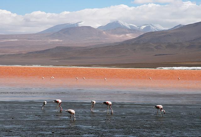 TOP 10 paisajes del Altiplano de los Andes Centrales que cuesta creer que existen 【Parte I】 22