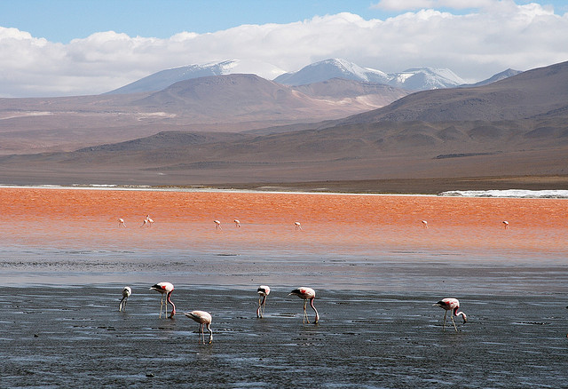Laguna Colorada,Bolivia