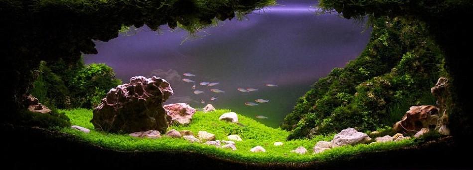 Paisajes de ensueño en el acuario_Spanish.china.org.cn_中国最