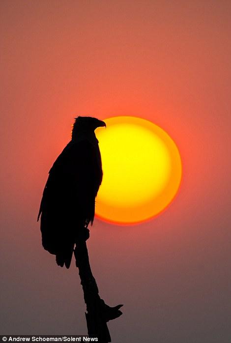 Fotografías de la vida silvestre en África del Sur 2