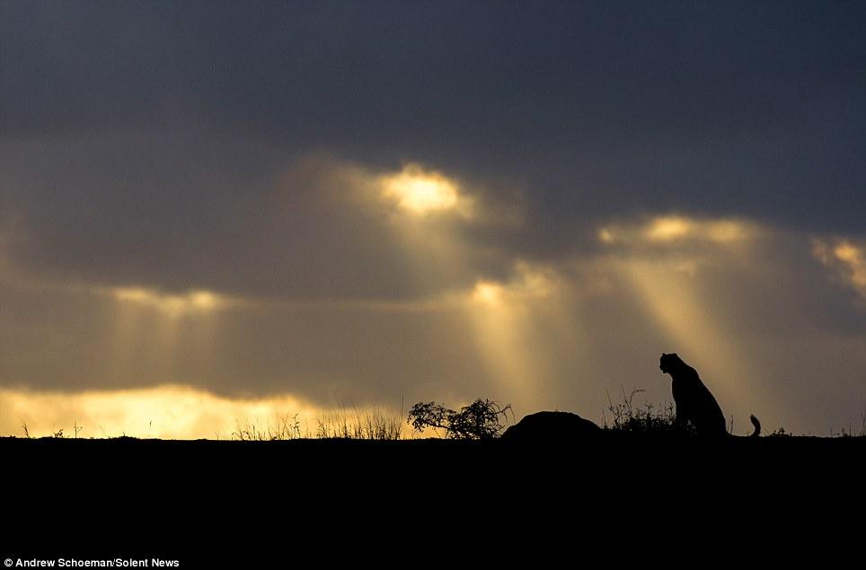 Fotografías de la vida silvestre en África del Sur 3