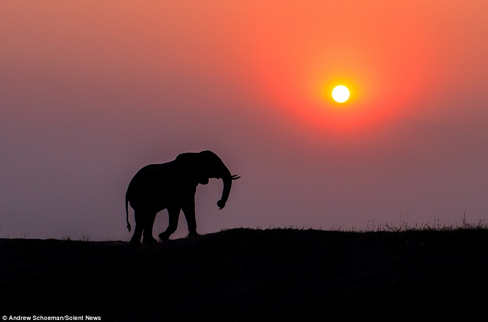 Fotografías de la vida silvestre en África del Sur 5