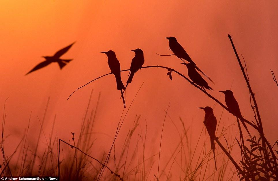 Fotografías de la vida silvestre en África del Sur 6
