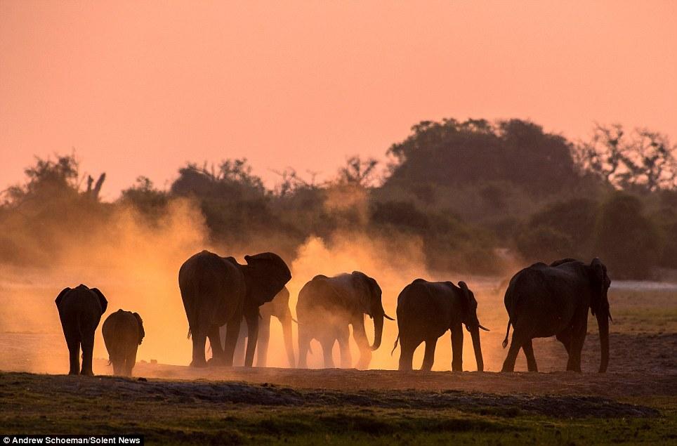Fotografías de la vida silvestre en África del Sur 8