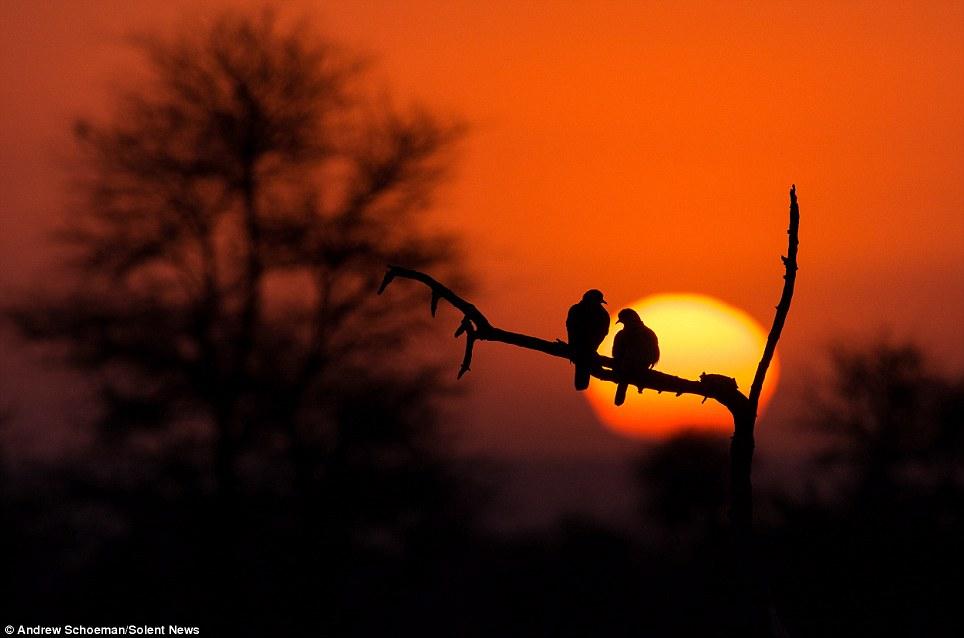 Fotografías de la vida silvestre en África del Sur 9