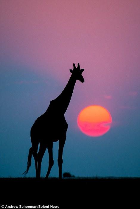 Fotografías de la vida silvestre en África del Sur 11