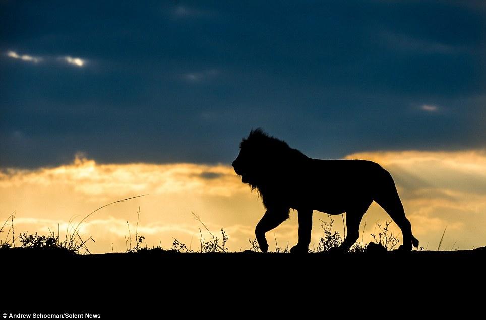 Fotografías de la vida silvestre en África del Sur12