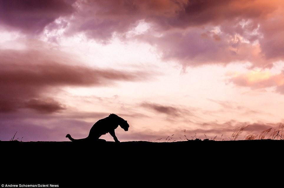 Fotografías de la vida silvestre en África del Sur 14