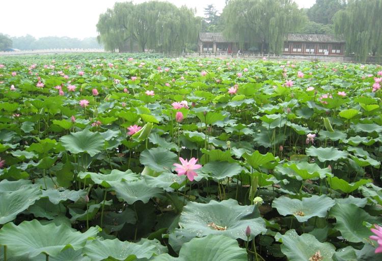 Enciclopedia de la cultura china antiguo palacio de for Jardin imperial chino