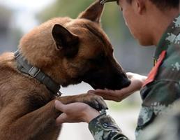 Base para el adiestramiento de perros policía en Nanjing