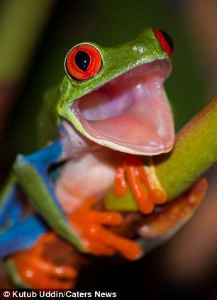 Image result for rana sonriendo