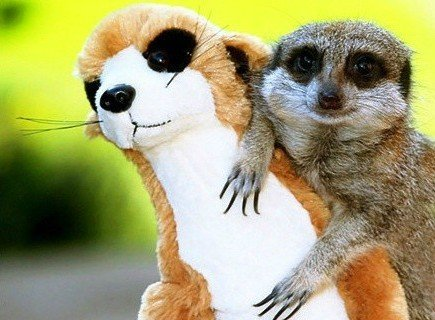 Adorables animalitos con sus marionetas