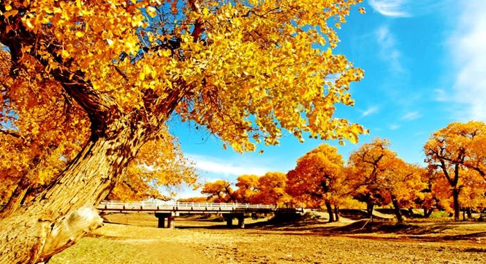 Los mejores destinos de China para retratar el otoño