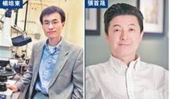 Cuatro chinos estadounidenses en la lista de predicciones al Premio Nobel