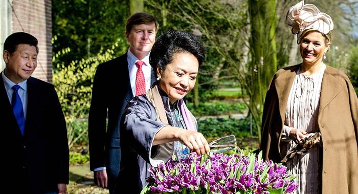 """Tulipanes """"Cathey"""" de Peng Liyuan florecerán en Jardín Botánico de Beijing"""