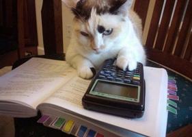 Mascotas estudiosos