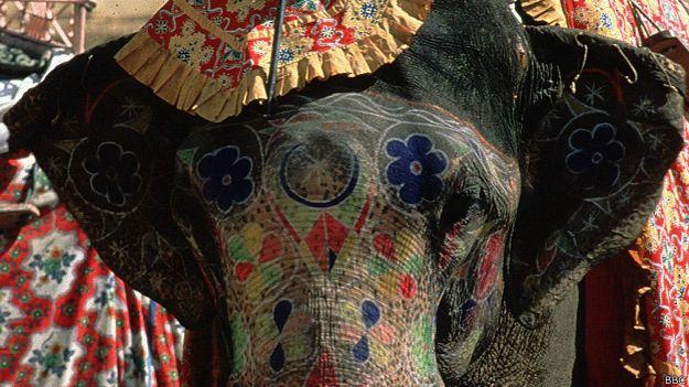 La cruda realidad de los animales sagrados