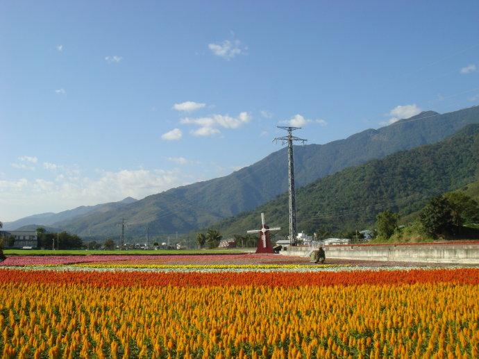 Mar colorido de flores en el Valle Vertical Huadong de Taiwán1