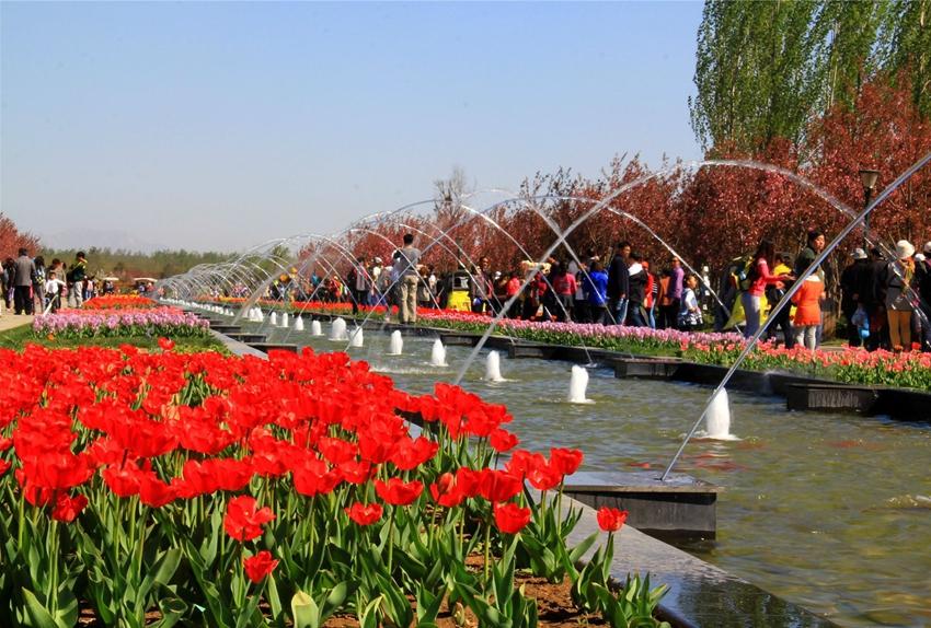 Puerto internacional de flores frescas de Shunyi, Beijing: ¡que florezcan las tulipas! 1