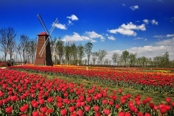 ¡que florezcan las tulipas!