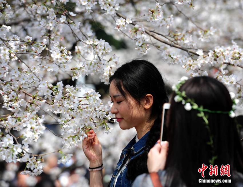 Las flores de cerezo de la Universidad de Wuhan atraen a grandes multitudes de turistas1