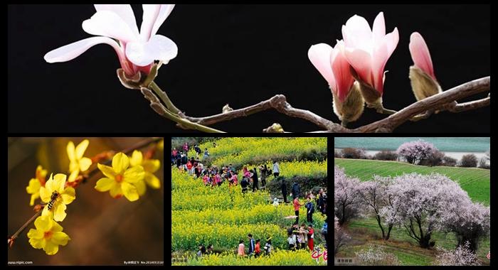 Contemplación de las flores en primavera en China