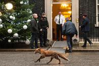 Un zorro en Downing Street