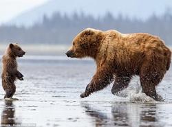 El amor maternal en el mundo de los animales