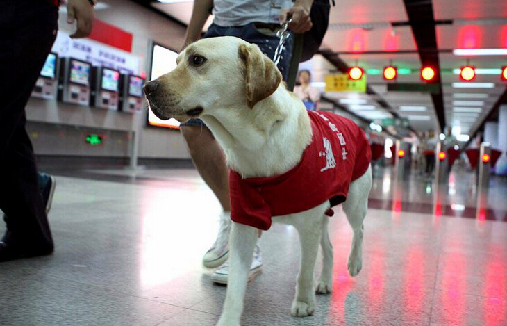 Beijing autoriza entrada de perros guía a metro