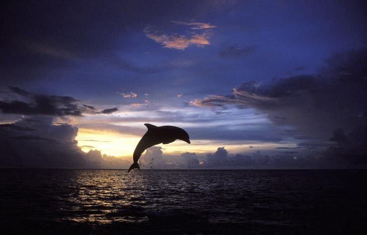 Fotos Espectaculares De Animales Entre Bellos Amaneceres Y Puestas