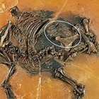 Encuentran feto en fósil de animal parecido a caballo de 48 millones de años