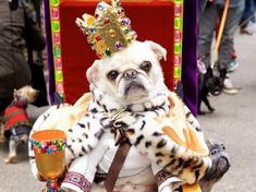 Desfile de los perros en el Día de Halloween