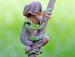 Un caracol encima de cabeza de una rana