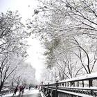 Escasa nieve caída amenaza mayor pradera de China