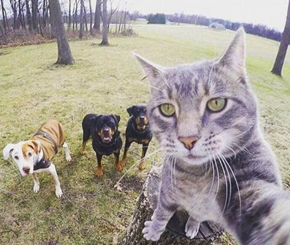 Selfies 'tomados' por gatos