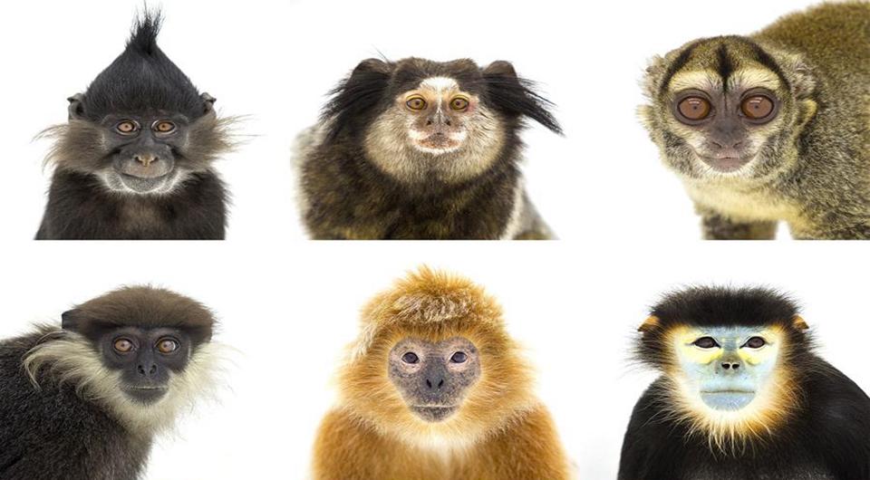 El mundo de monos bajo el lente
