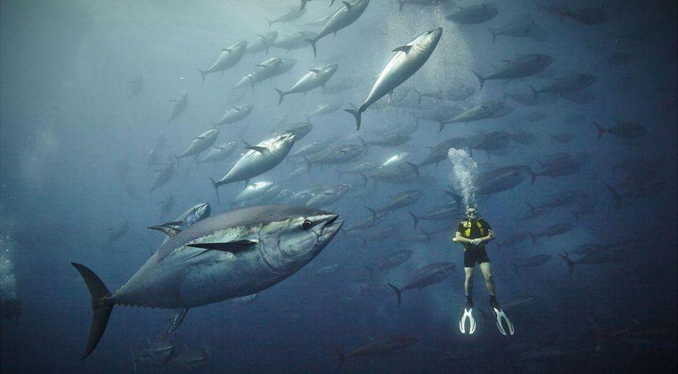 Mundo bajo el mar