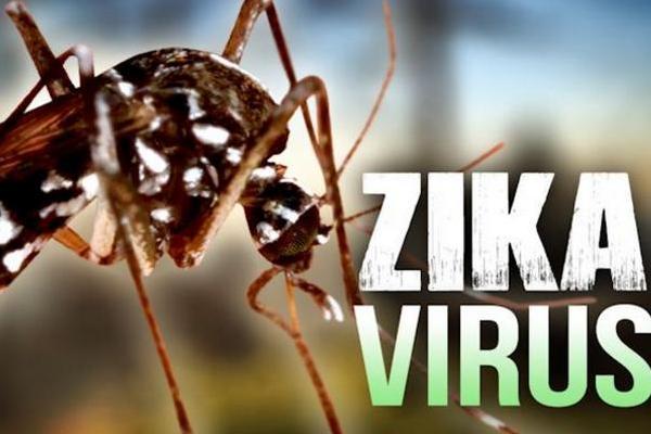 El zika declarado emergencia global por la OMS