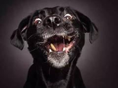 El mismismo momento cuando los perros reciban comida
